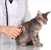 Ветеринарные клиники в Верхней Тойме
